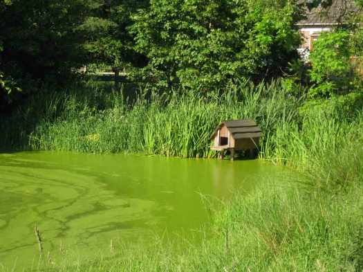 Wendland-Teich-gruen-schlueter