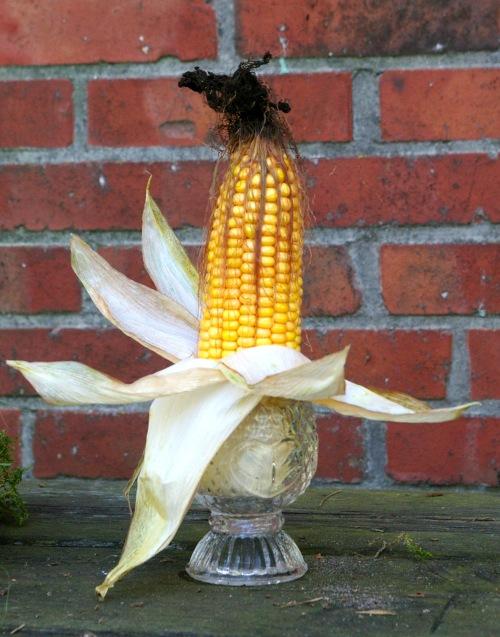 Maiskolben im Glas mit Blätter