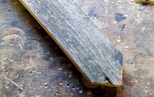 tannenbaum-spitze