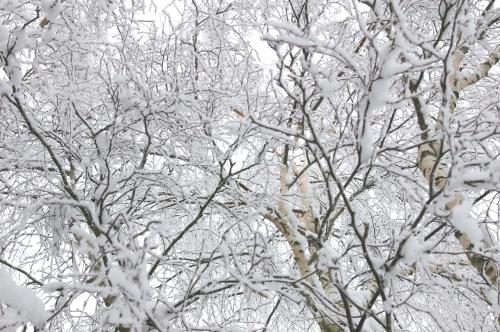 Aeste mit Schnee bedeckt