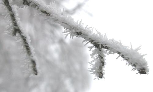 Frost schnee Winter