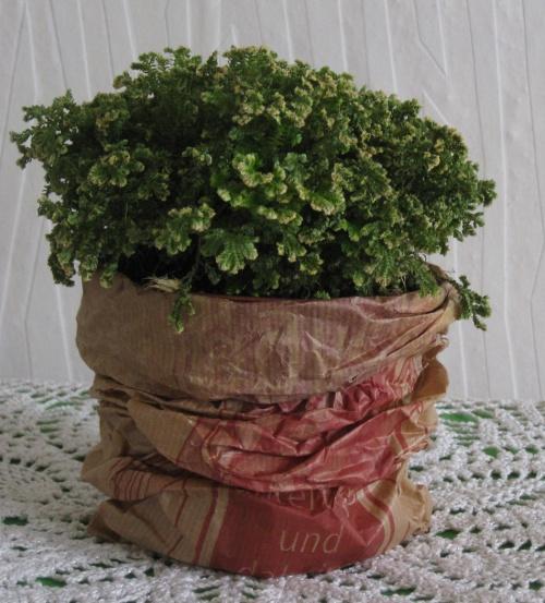 Pflanze mit Papiertuete als Übertopf