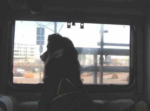 Blick aus dem Womo-Fenster