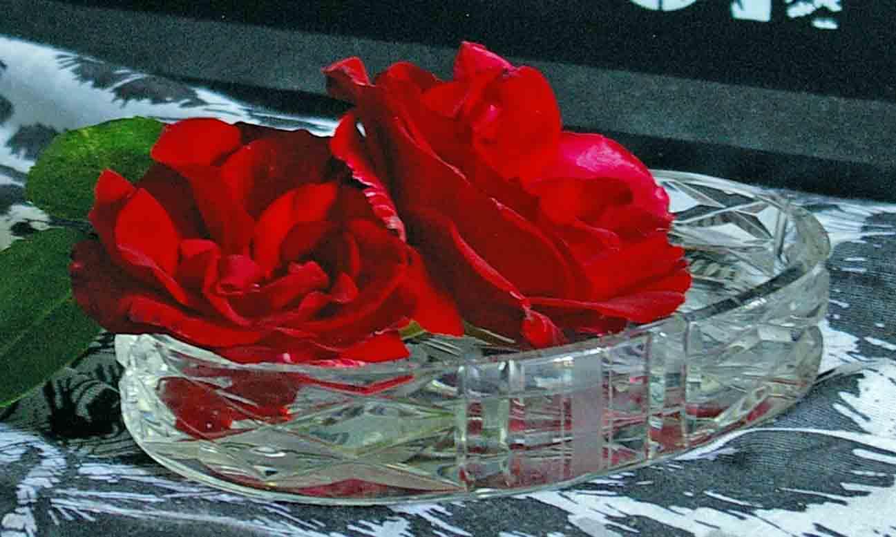 Dekoidee rote Rosen