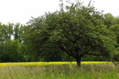 in die Breite gehen Baum