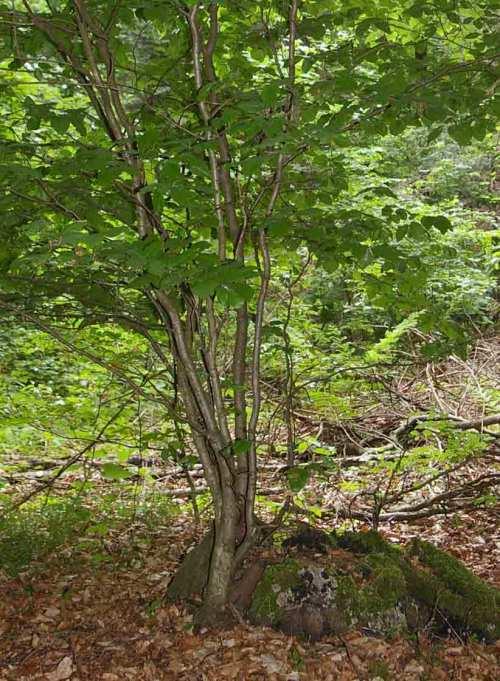 Neuanfang Baum