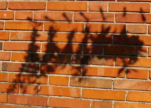 Schattenspiele Kraeuter