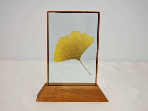Ginkoblatt zwischen Glasscheiben