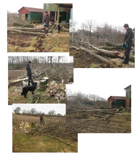 Holz einlagern