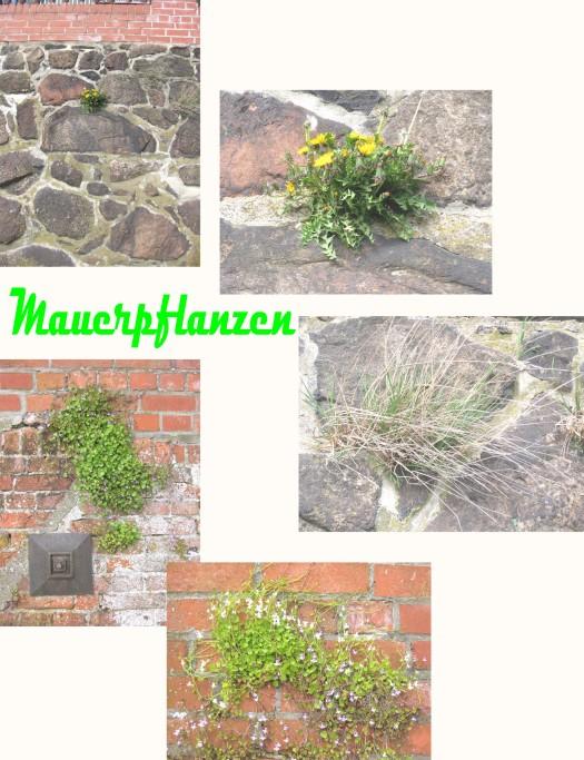 Pflanzen wachsen in der Mauer
