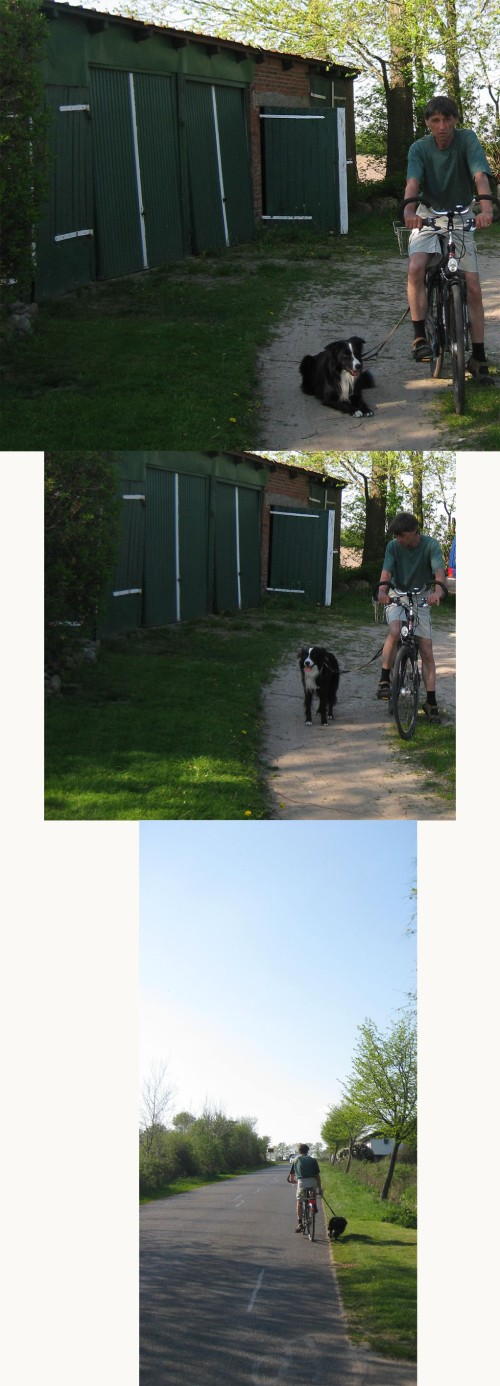 Hund am Fahrrad