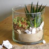 Wohnen mit Pflanzen - Deko-Ideen im Glas
