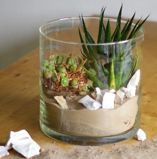 Pflanzen im Glas präsentieren
