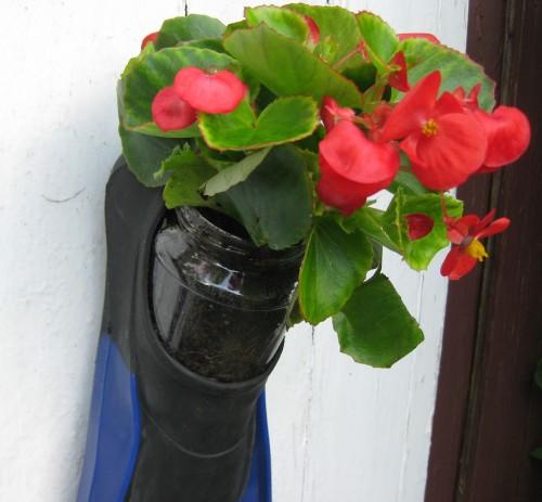 Blumen in Taucherflossen