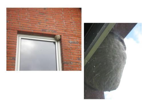 Wespennest am Fenster