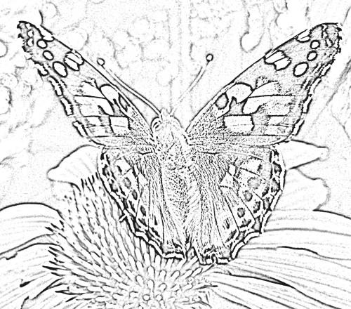 Schmetterling vorlage