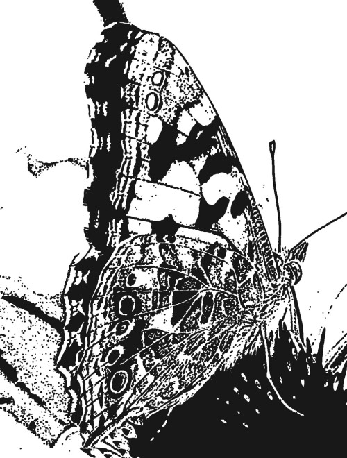 Vorlage Schmetterling motiv