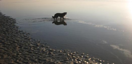 der Hund im Wasser