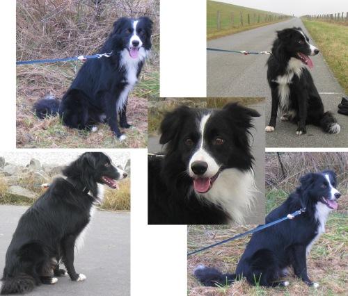 Dezember spaziergänge mit Hund