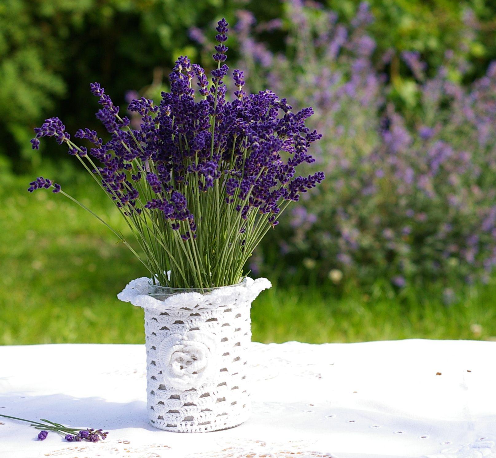 Dko mit Lavendel