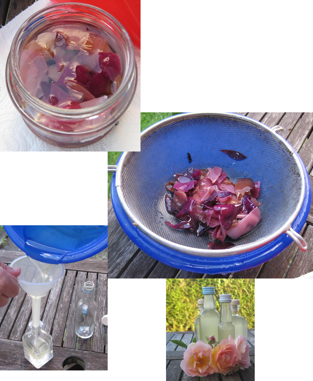 einfaches Rosenöl herstellen