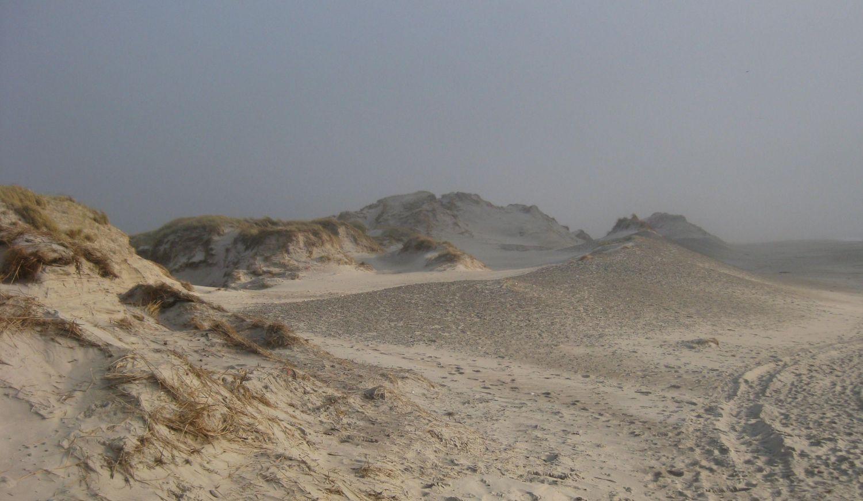 Dänemarks schönen Sandstrände im Frühjahr, Meerliebe, am Meer