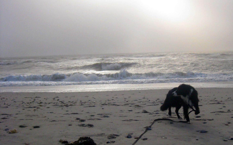 Hund am Strand an der Nordsee in Dänemark, schöner Sandstrand