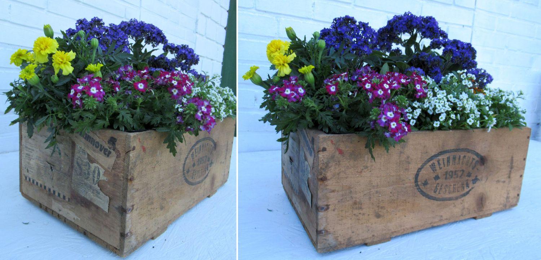 Alte Holzkiste mit Blumen bepflanzen, schöne Ideen für die Gartendeko