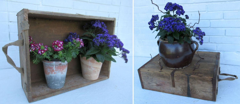 Alte Kiste als Blumendekoration