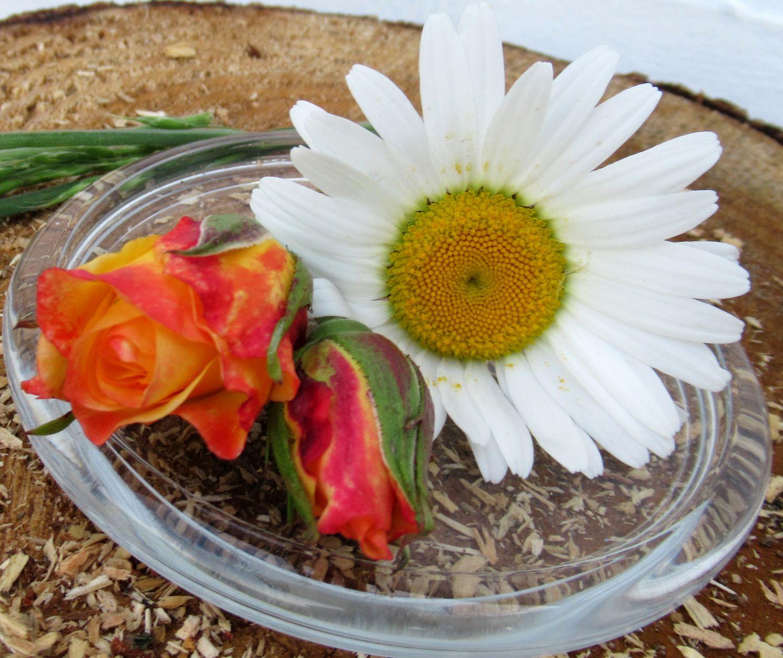 Geschlossene Rosenblüten und Magerwiesen-Margeriten auf einer Glasplatte, schlichte wirkungsvolle Dekoration