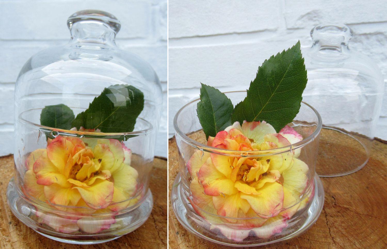 Rosenblüte mit Blatt in der Glasglocke, schöne Tischdekoration mit wenig Aufwand