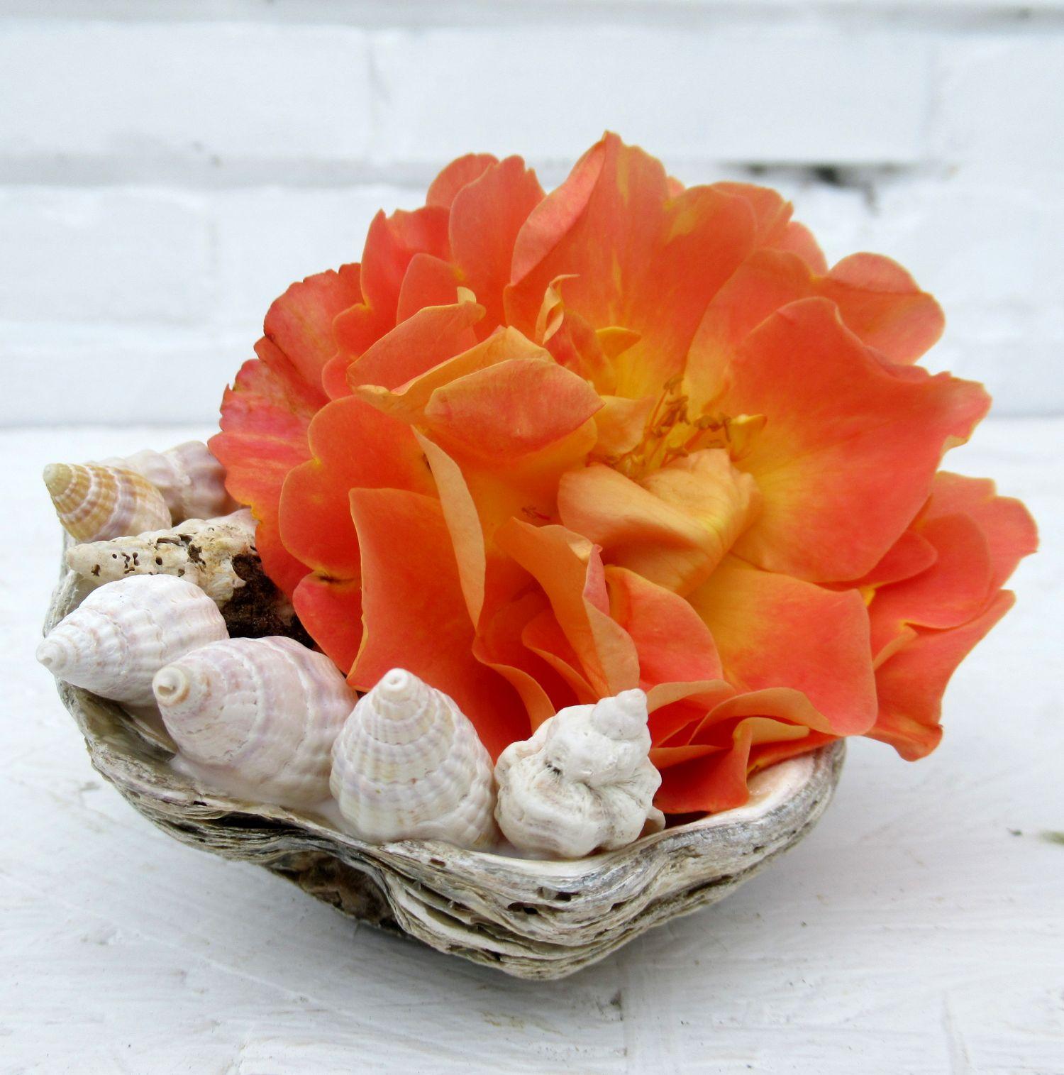 Bastelidee mit Muscheln, eine schöne Rosenblüte als Tischdekoration