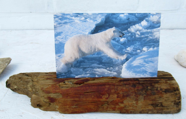 Postkartenständer aus einem Stück Treibholz gebaut, Idee