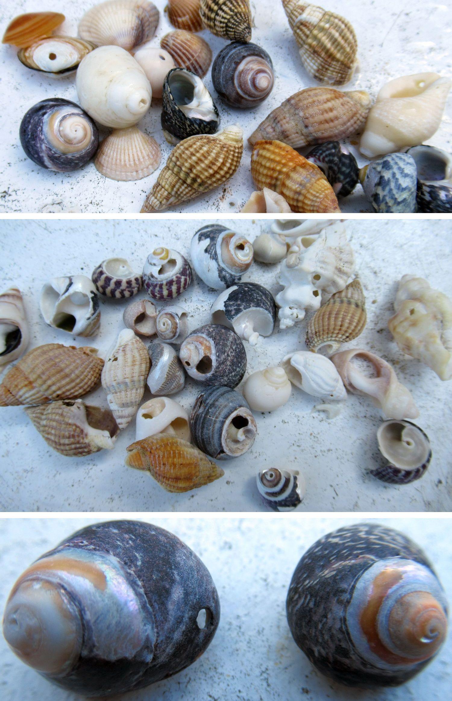 Du kannst Löcher mit einem Dremel in Muscheln bohren oder Muscheln suchen, die bereits Löcher haben