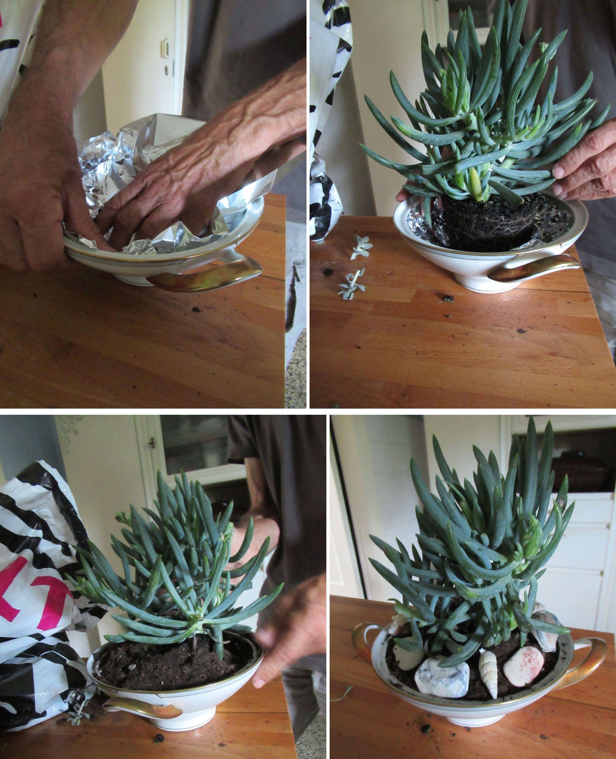 eine suppenschüseel bepflanzen und dekorieren