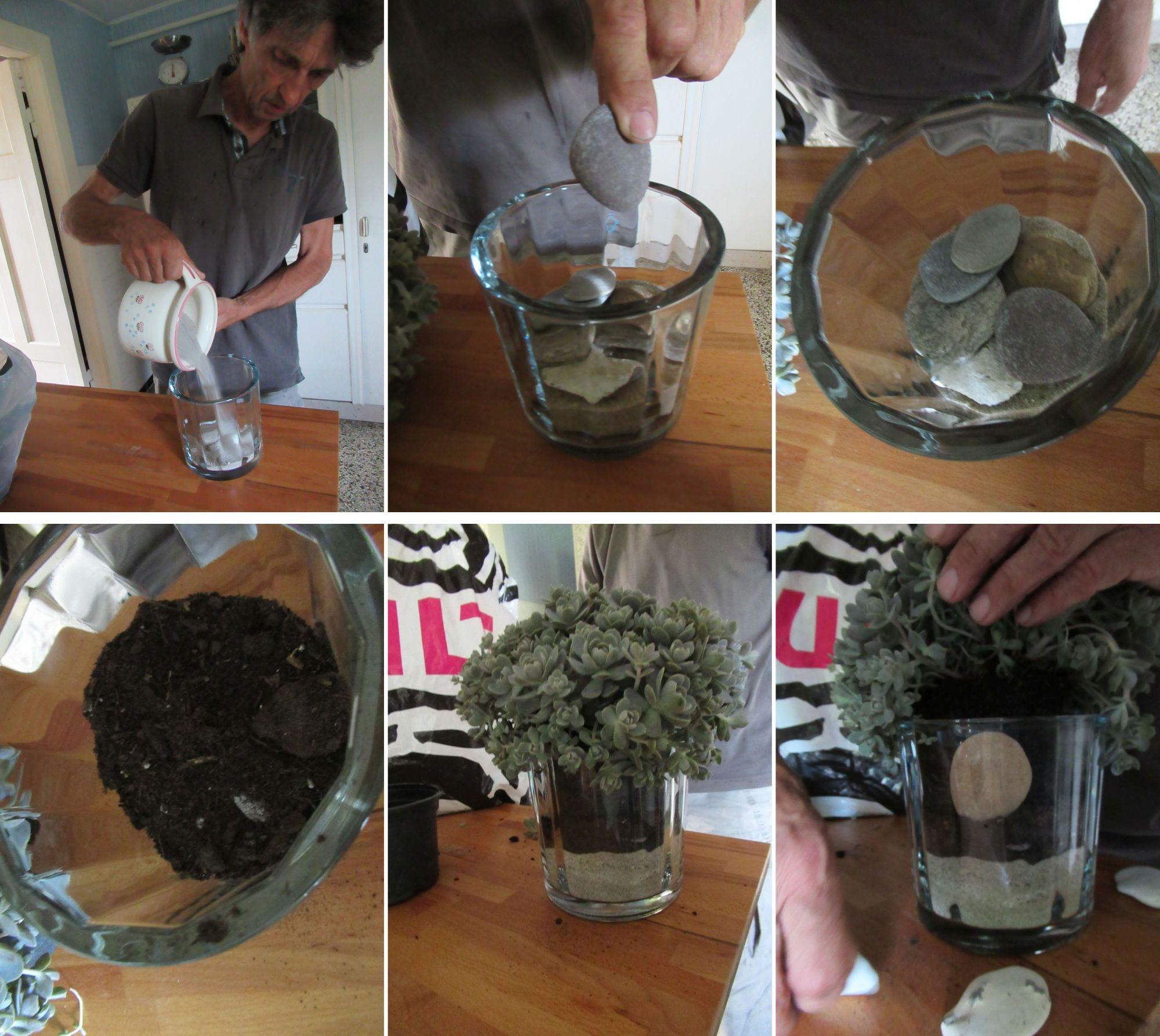 ein Übertopf aus Glas setzt die Pflanze besonders in Szene