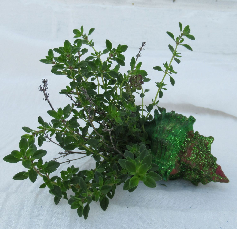 Muschel grün angemalt und mit Grünpflanzen gefüllt als Tischdekoration