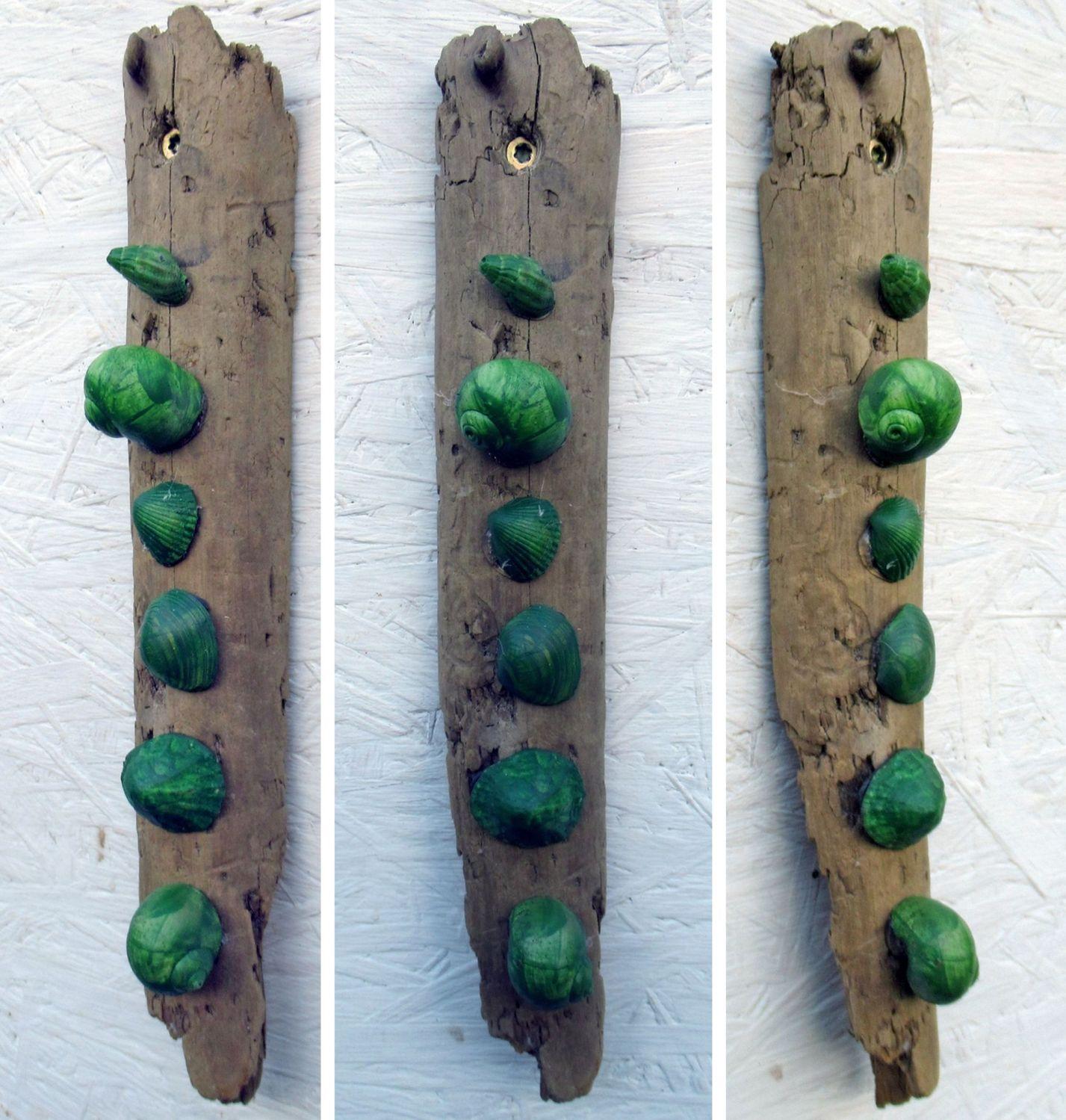 Grüne Muscheln auf Treibholz als Dekoration für die Wand